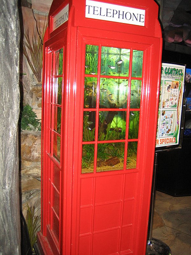 phone box fish tank